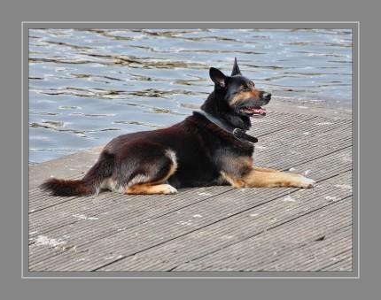 Der Schäferhund ist lernwillig, aber auch selbstbewusst und braucht eine fortdauernde konsequente Erziehung mit viel Geduld, positiver Verstärkung und Verständnis. Er zeigt ein stark ausgeprägtes Schutzverhalten.